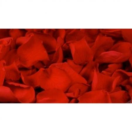 Rosenblätter echt, 1 Liter - konserviert Farbe Rot