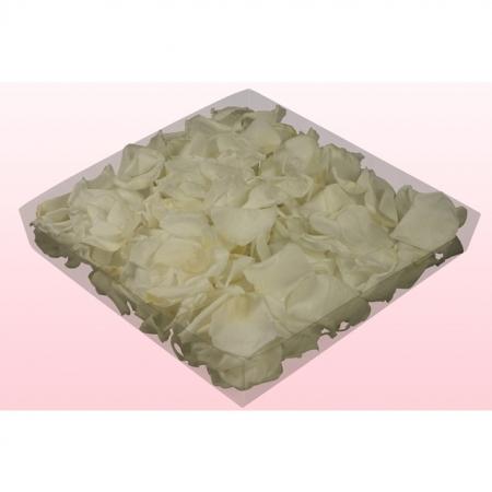 Rosenblätter echt, 2 Liter - konserviert Farbe Weiss